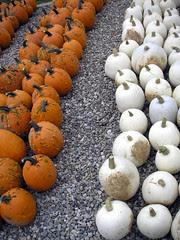 An October Farm Day! 5