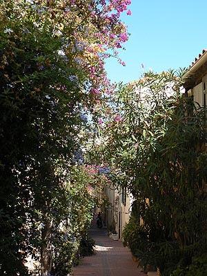 rues fleuries du safranier.jpg