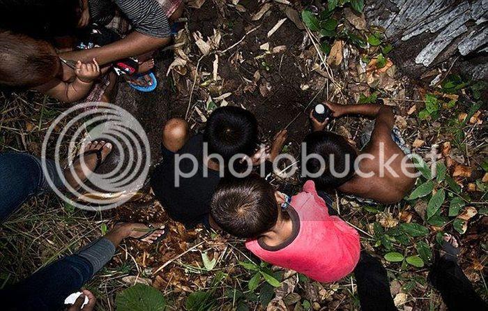 Niños camboyanos cazando tarántulas