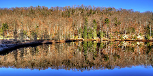 Pond Reflections by David Patterson