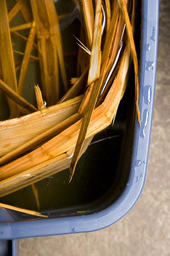 soaking cedar strips
