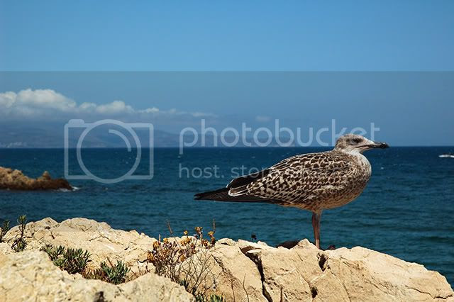 Seagull in Costa Brava[enlarge]