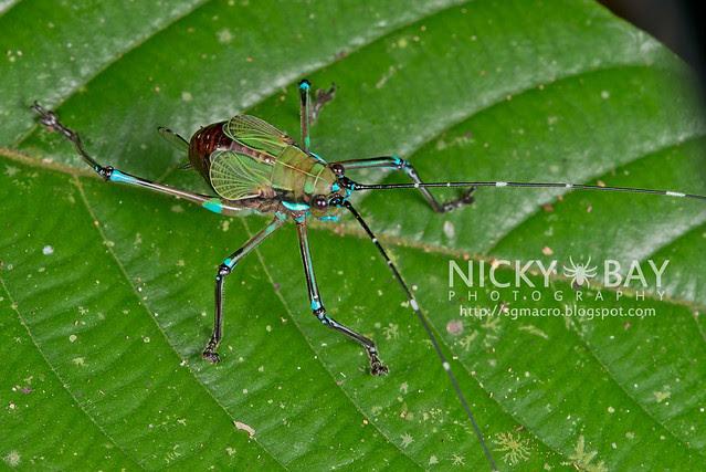 Katydid (Tettigoniidae) - DSC_9127