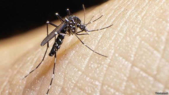 El zika es transmitido por la picadura de un mosquito. Foto: Thinkstock