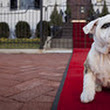 Marines Roll Out Red Carpet for Chesty the Recruit
