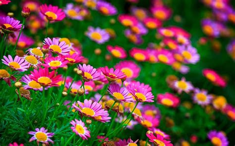 beautiful flowers wallpapers group
