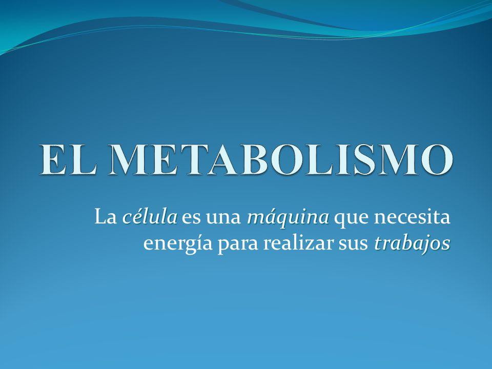 Hacer Acelerar metabolismo más alto que Barack Obama