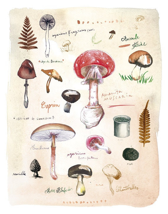Mushrooms poster - Fungi botanical plate - 11X14 Food art print - The kitchen collection