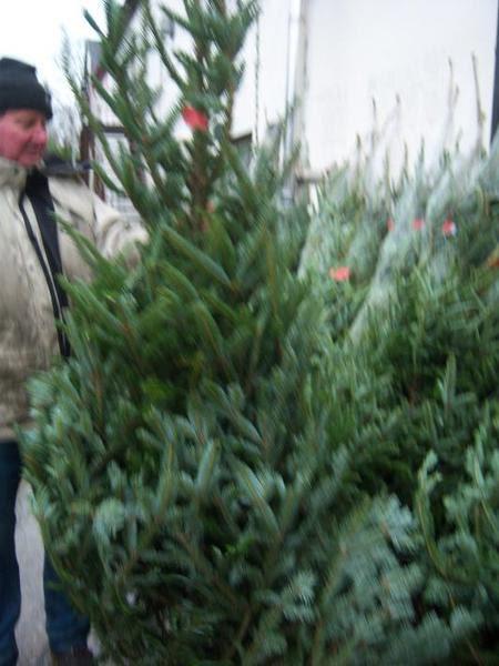 christmas trees for sale buy real christmas trees belfast northern ireland christmas stands ni - Real Christmas Tree For Sale