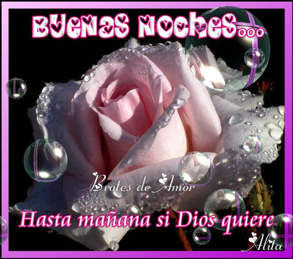 Imagenes De Buenas Noches Con Rosas Descargar Imagenes Gratis