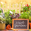 5 Herbs You Can Grow in a Garden | 911 Restoration