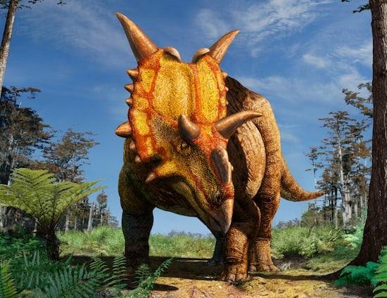 Xenoceratops foremostensis  νέο είδος δεινοσαύρου