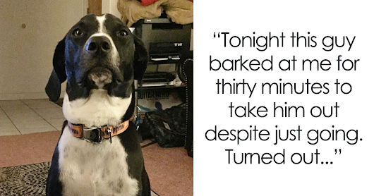 30+ Times Dogs Surprised Humans With Their Incredibly Heroic Acts