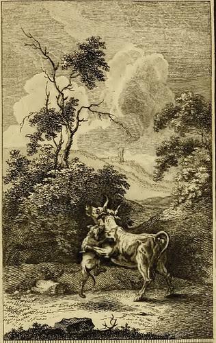 Taurus et Canis
