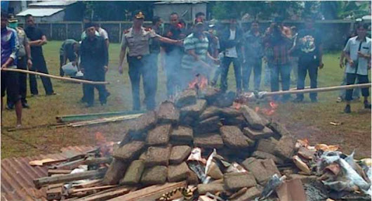 Indonesian police burn 3.3 tons of weed; get entire town high