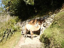 Llamas Andhy.JPG