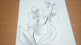Contoh Sketsa Sketsa Bunga Anggrek