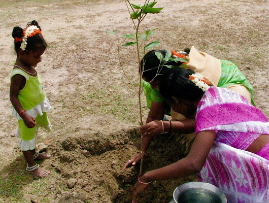 Indian men and women planted 66 millions trees :)