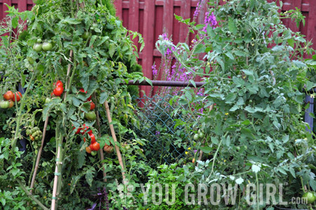 How (and Why) I Prune My Tomatoes - You Grow Girl