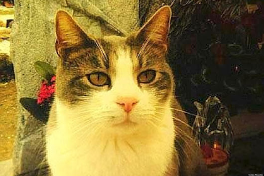 Loyal Italian Cat, Toldo, Brings Gifts To Owner's Grave (PHOTO)
