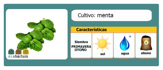 Ficha cultivo menta | EcoHortum