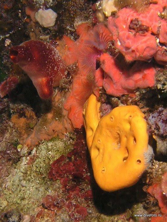 Красочный подводный мир Мальты фото