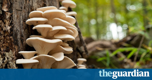 Free-for-all by wild mushroom pickers puts woodland habitats at risk | Science | The Guardian