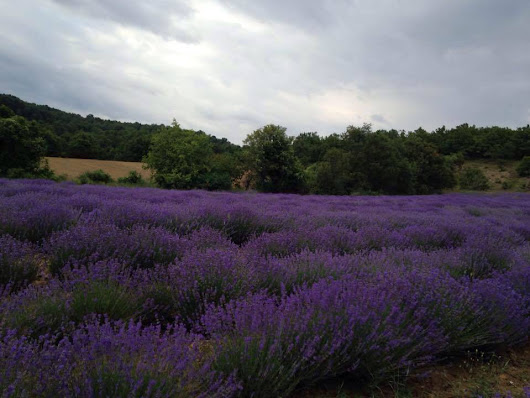 The Lavender World in Greece