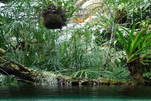 una broma... un jardín tropical con agua de pega