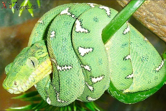 Mind Blowing Facts About Snakes From Around The World