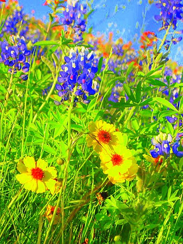 Texas Wildflowers [saturated] by slight clutter.