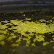 Algae, the Kawarthas, and You | Cottage Resources | Blog