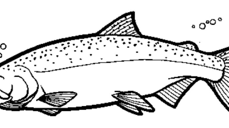 Salmon coloring, Download Salmon coloring for free 2019