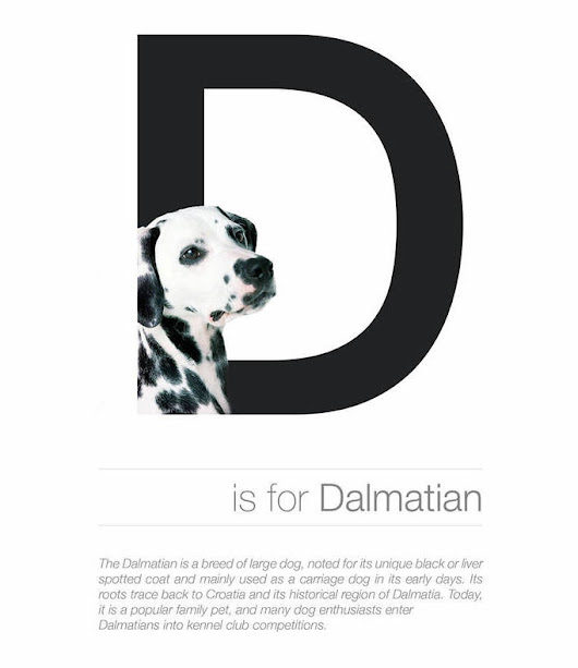 What happens when dogs and fonts come together - The Dog Alphabet