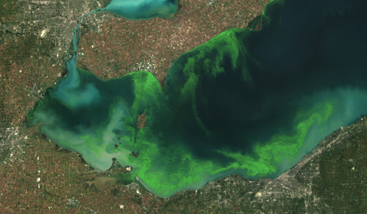 ​The Plan to Turn Toxic Algal Blooms into Energy | Motherboard