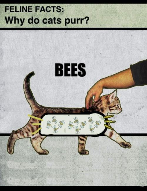 Bees make cats purr