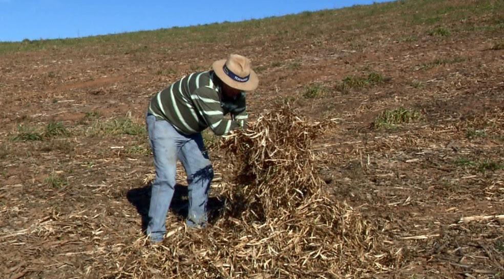 Garantia cobre prejuízos nas lavouras de feijão, milho, mandioca, algodão e arroz (Foto: Reprodução EPTV)