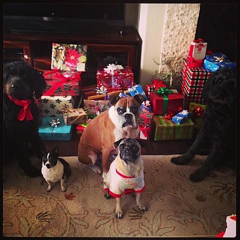 Christmas pups.JPG