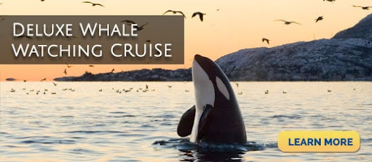 San Juan Cruises | Whale Watching | Bellingham | Friday Harbor | Seattle | Puget Sound