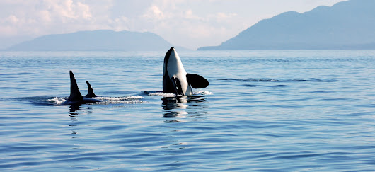 Whale Watching in Vancouver - Traveler's Digest