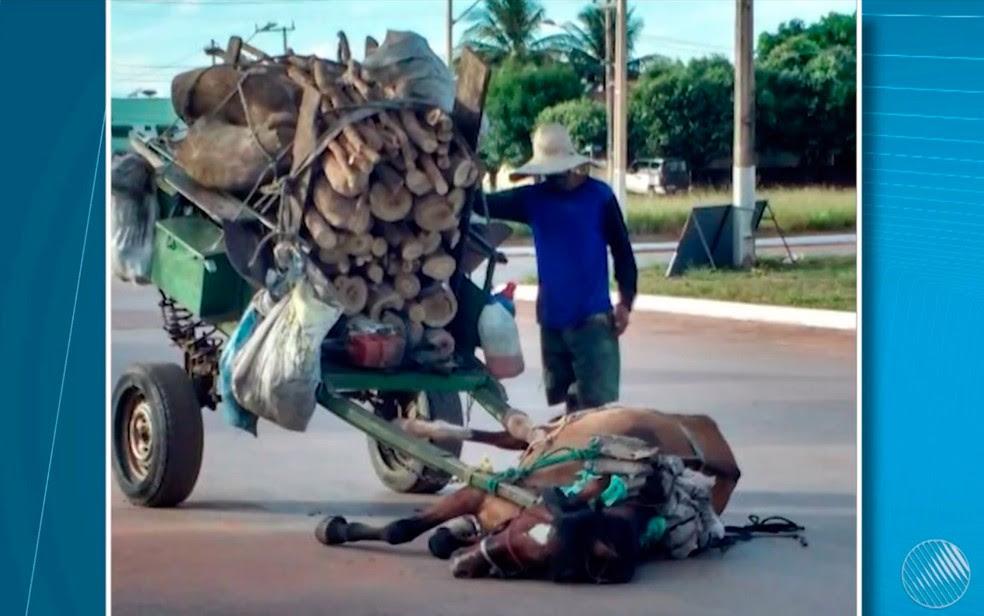 Cavalo 'desmaia' por não suportar puxar carga de madeira em carroça e dono é detido após foto viralizar (Foto: Reprodução/TV Oeste)