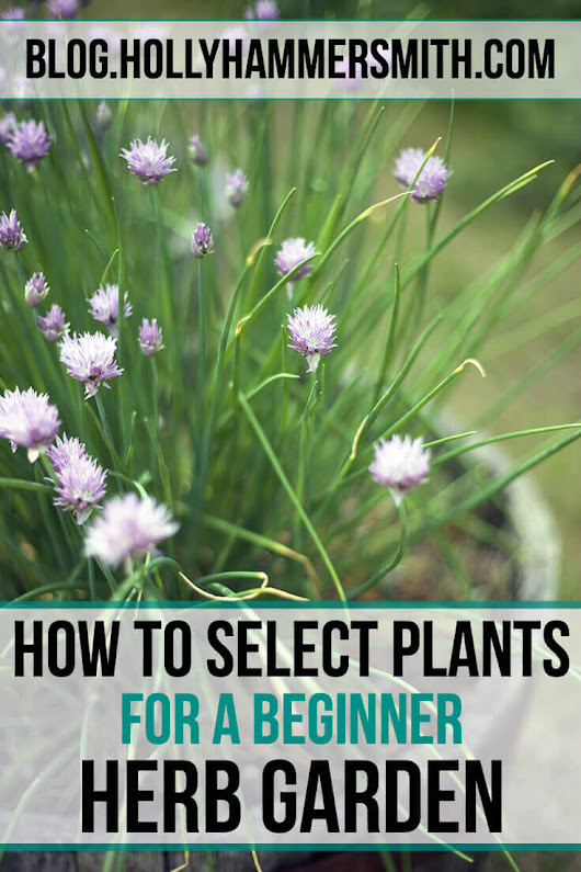 How to Select Plants for Your Beginner Herb Garden - Holly Hammersmith's Blog