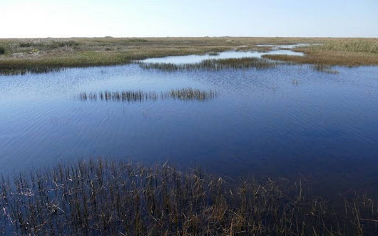 State commits to spending $250 million a year to repair Everglades