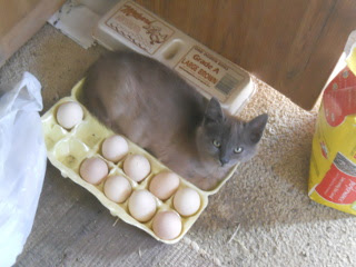 Mimi in an Egg Carton