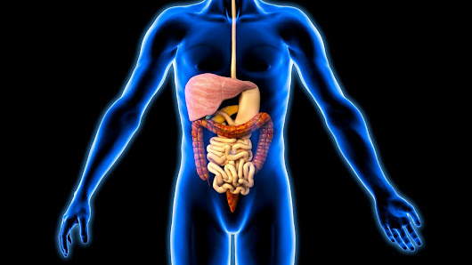 Gut microbes important for dietary health, 11/05/2015, Today - BBC Radio 4