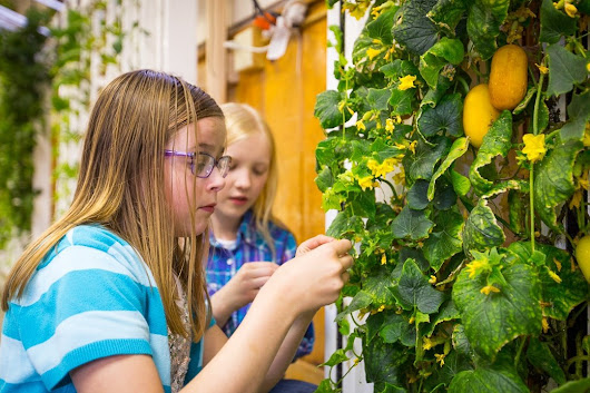 Edible Learning Lab: The 3 Things You Need to Start a School Garden