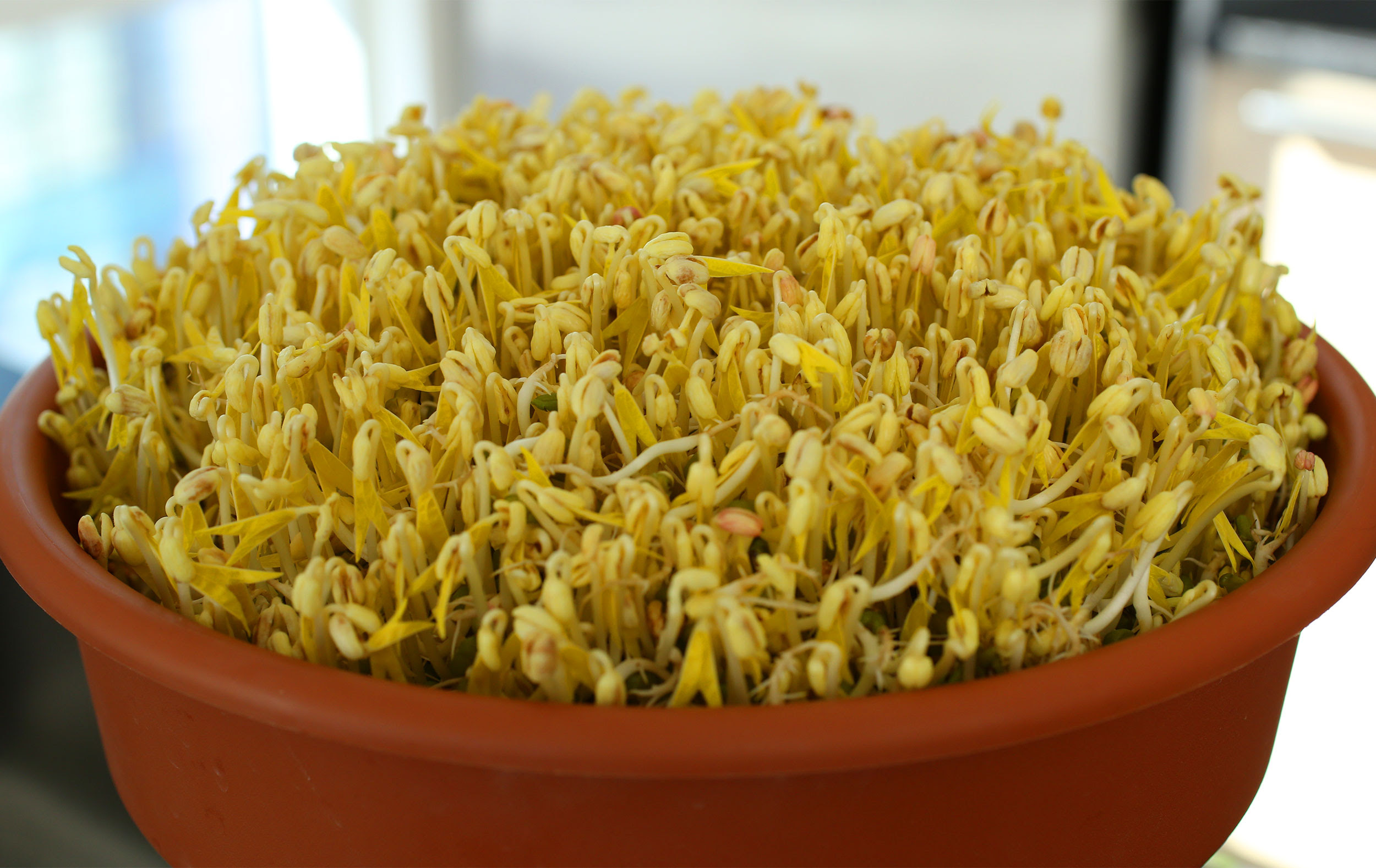 Mung bean sprouts recipe - Maangchi.com