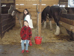 Girls by a Clydesdale Baby and Adult