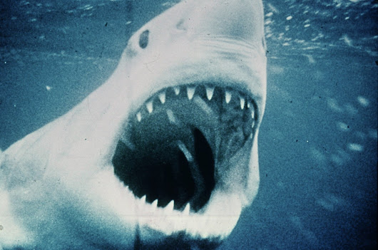 'Jaws' to be screened in Chicago theaters for 40th anniversary