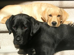 Zoe (black) and Dallas (yellow)